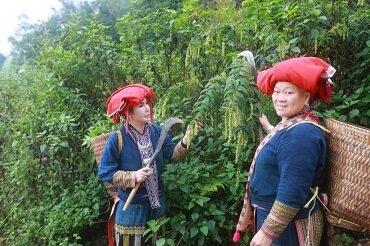 Cham Spa & Masage với hành trình đi hái lá thuốc người Dao đỏNước tắm tại Cham Spa được đun nấu trực tiếp bằng lò than củi